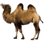 Domestic Animals | Farm Animals | Useful List & Great Images 23