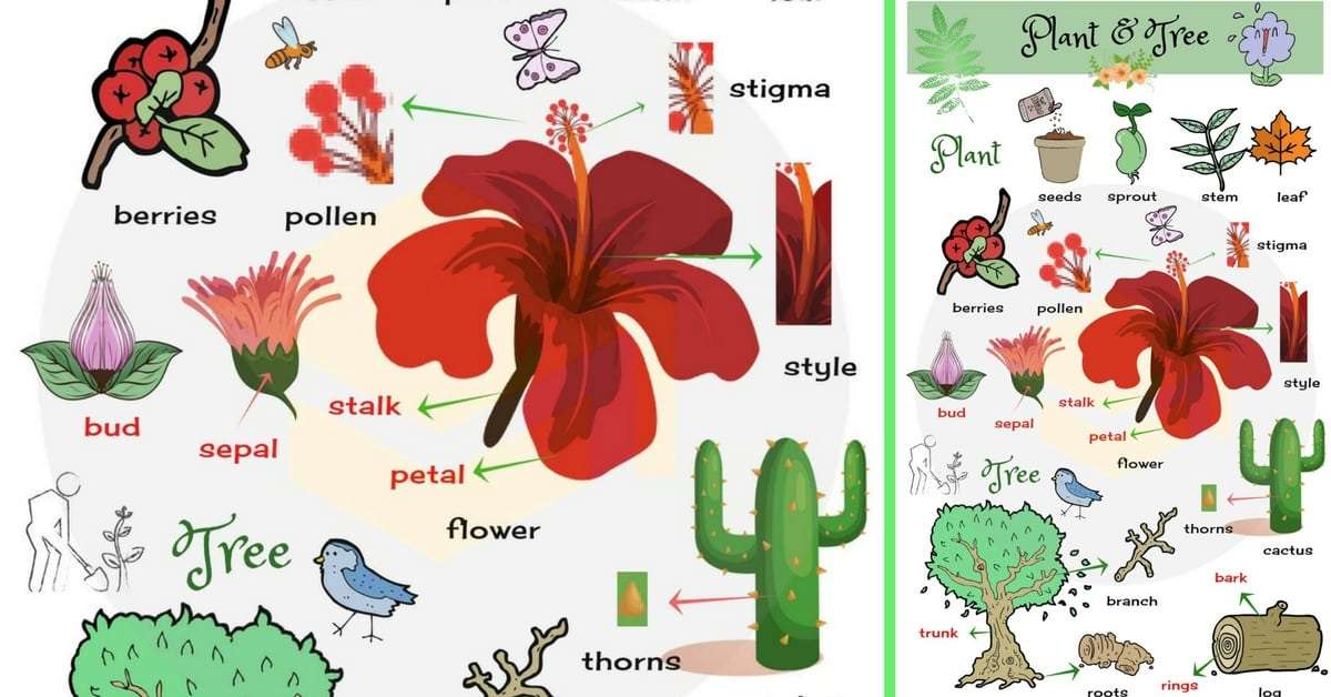 Different Parts of A Plant in English | Vocabulary 1