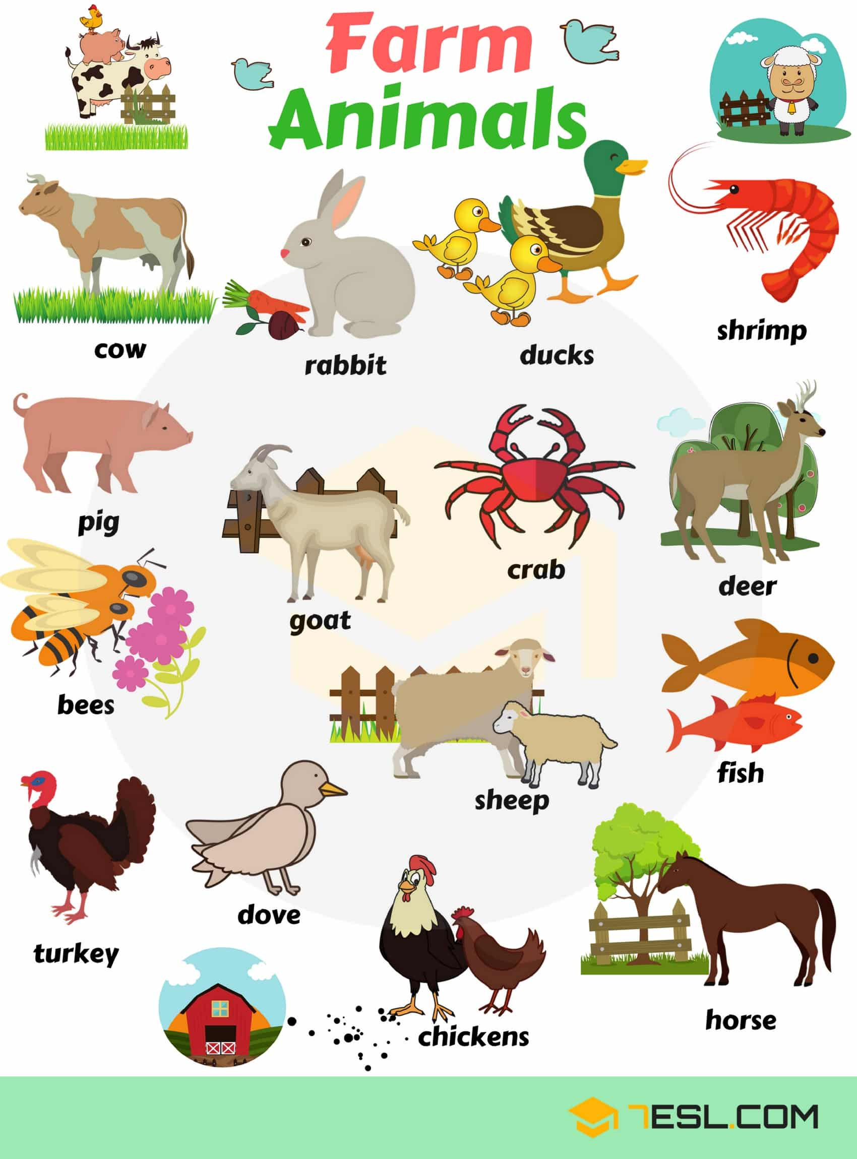 Animal Names: Types of Animals with List & Pictures • 7ESL