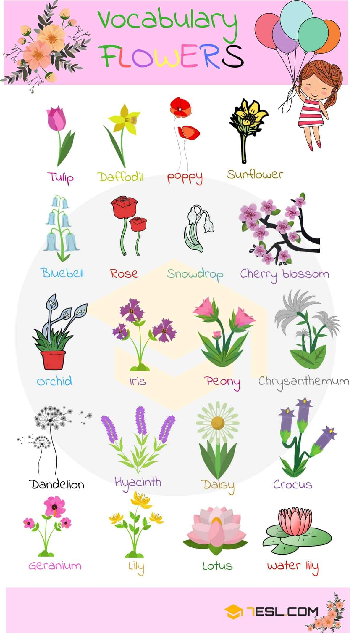 Flower Names in English | Picture