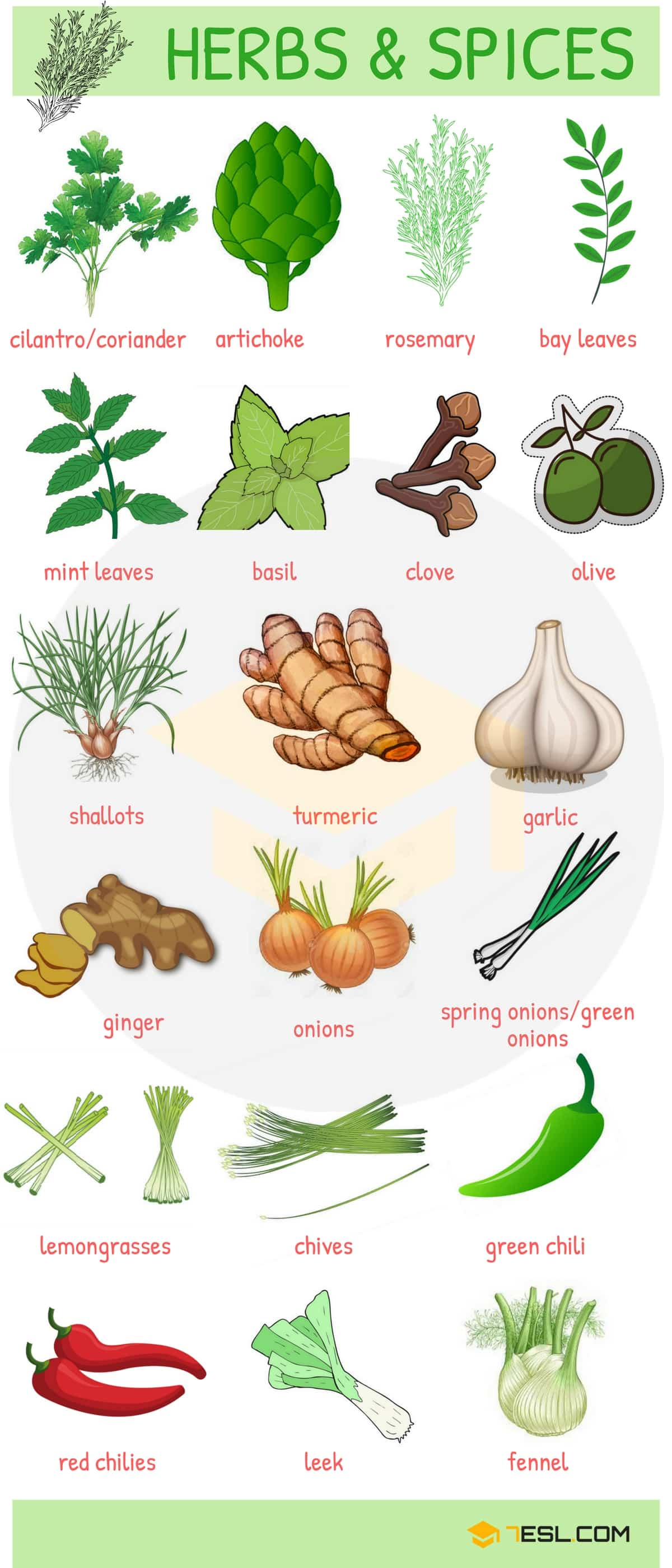 List of Herbs and Spices | Names of Spices and Herbs - 7 E S L