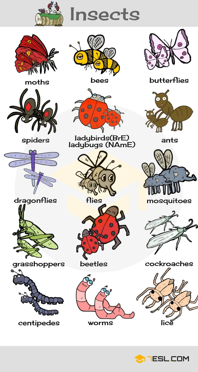 animals vocabulary insects