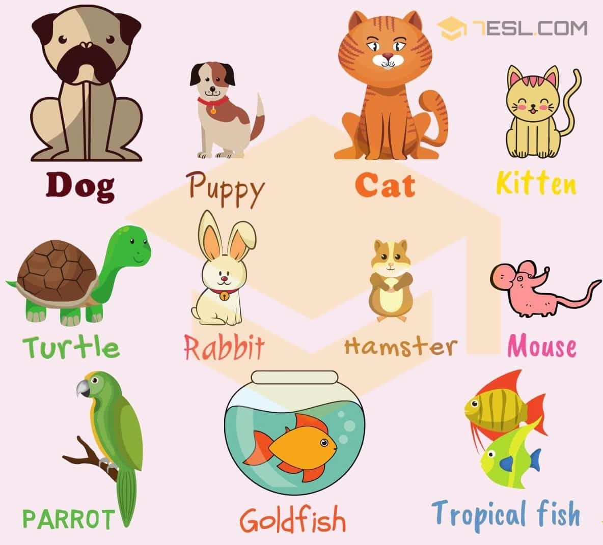 Pet Names: List of Pets & Types of Pets with Pictures