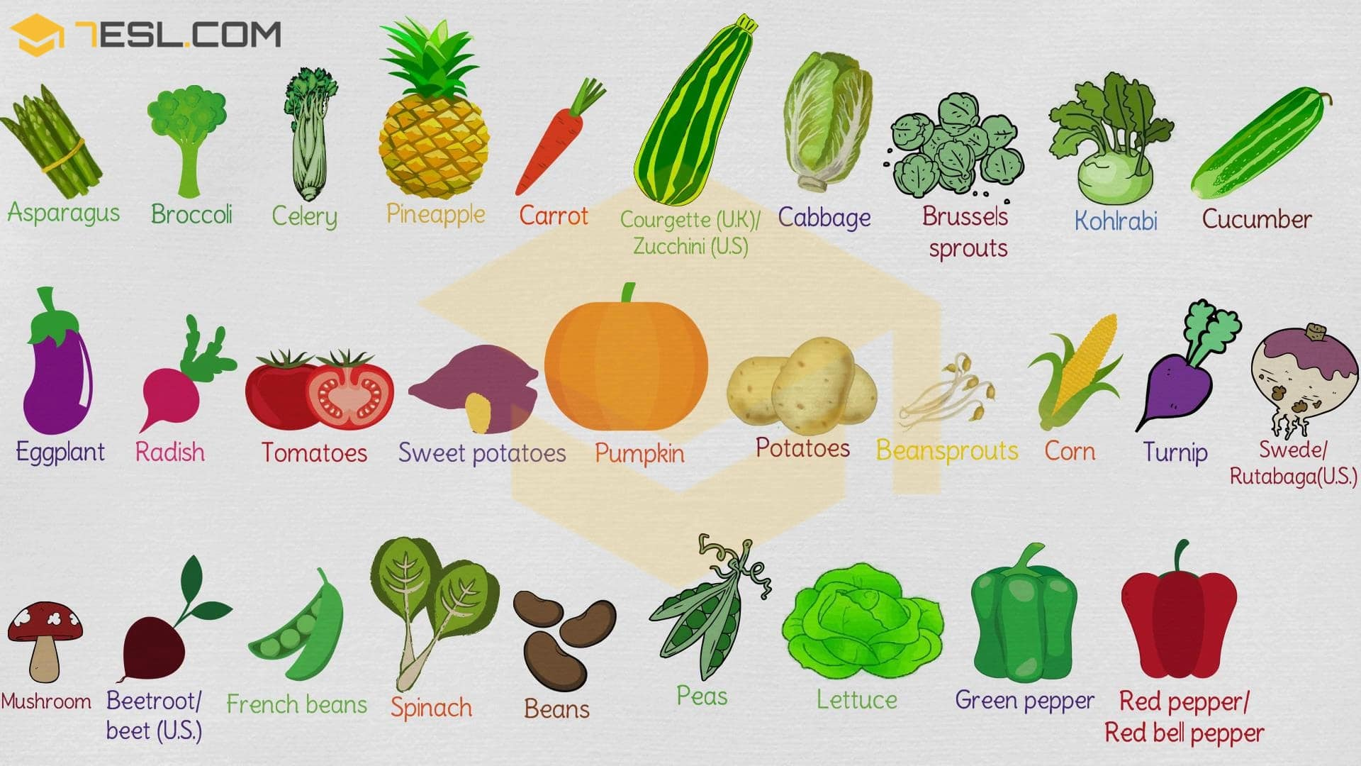 List Of Vegetables Useful Vegetables Names With Images 7