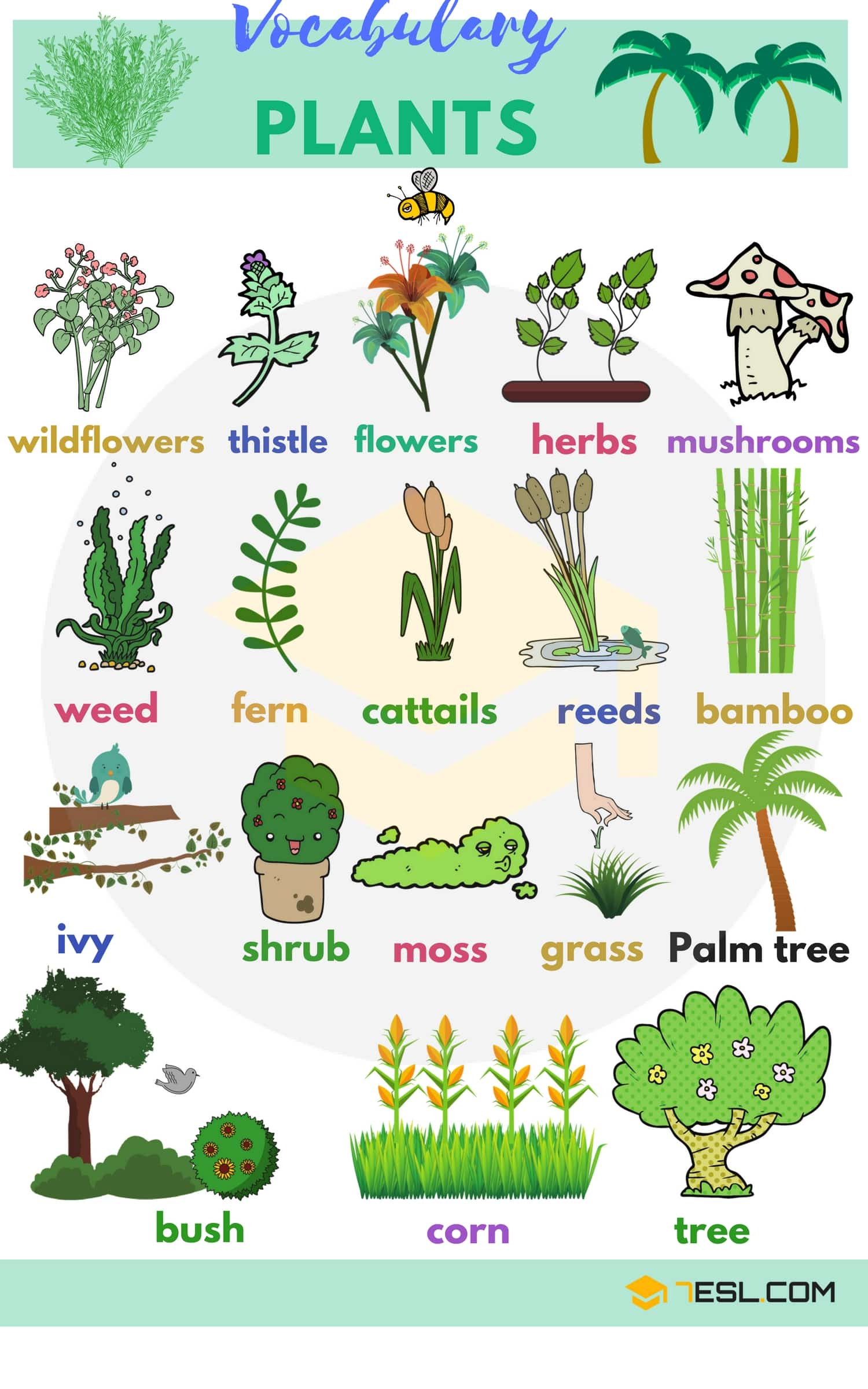 Plants and Trees Vocabulary | Picture