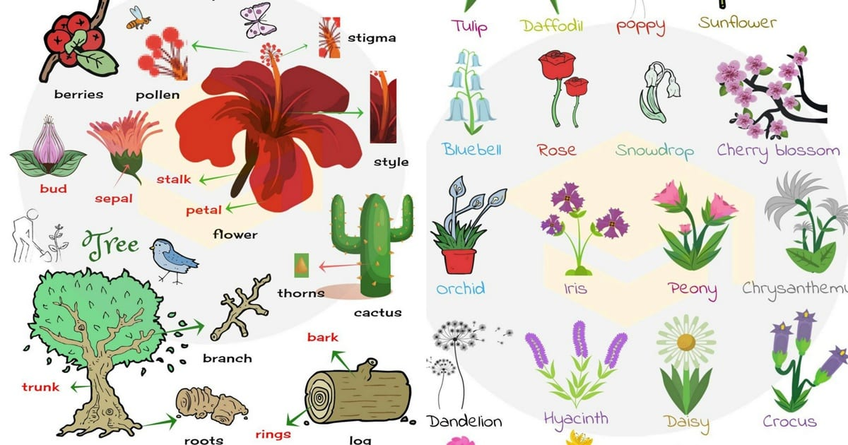 List of plant and flower names in english with pictures 7 e s l list of plant and flower names in english with pictures mightylinksfo