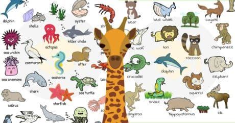 ANIMALS: Vocabulary, Names, List, Pictures 78