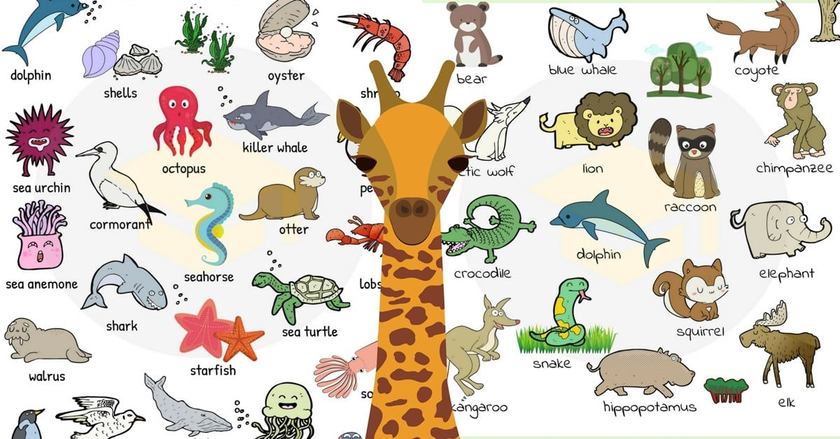 Animal Names Types Of Animals With