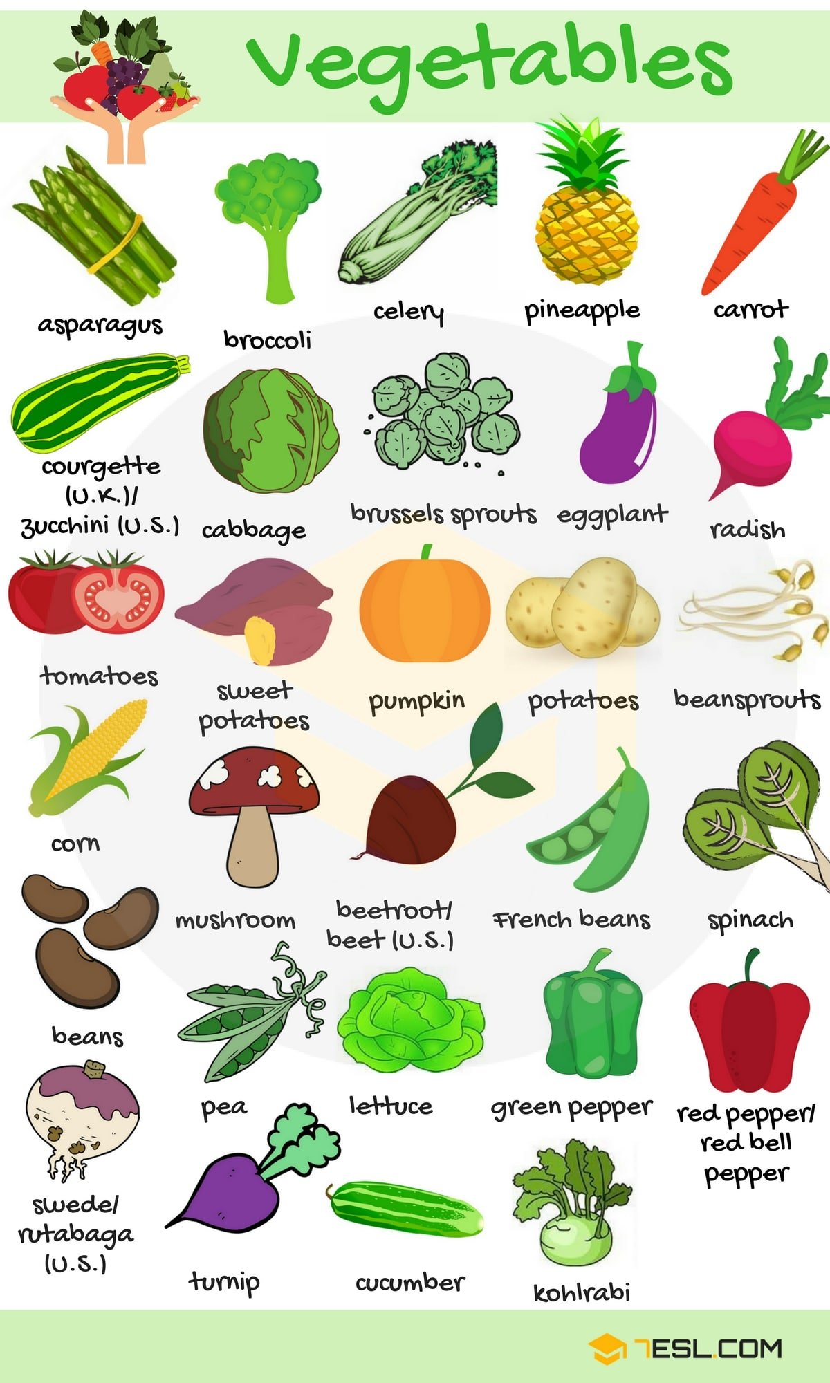 List of Vegetables: Useful Vegetables Names with Images ...