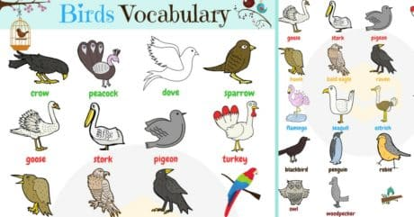 Birds Vocabulary in English | Learn English Bird Names 93