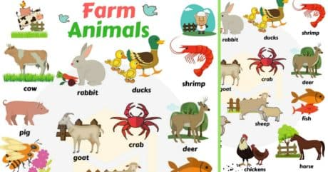 Farm and Domestic Animals Vocabulary | Domestic Animal Names 197