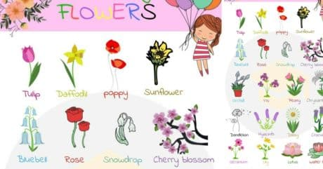 Flowers Vocabulary | Flowers Names in English 1