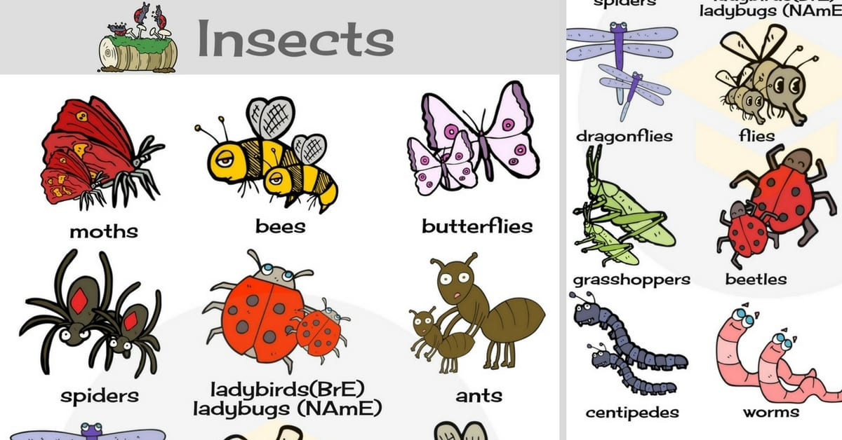 Names of Insects: List of Insects with Pictures - 7 E S L