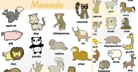 Mammals Vocabulary in English | Learn Mammal Names 138