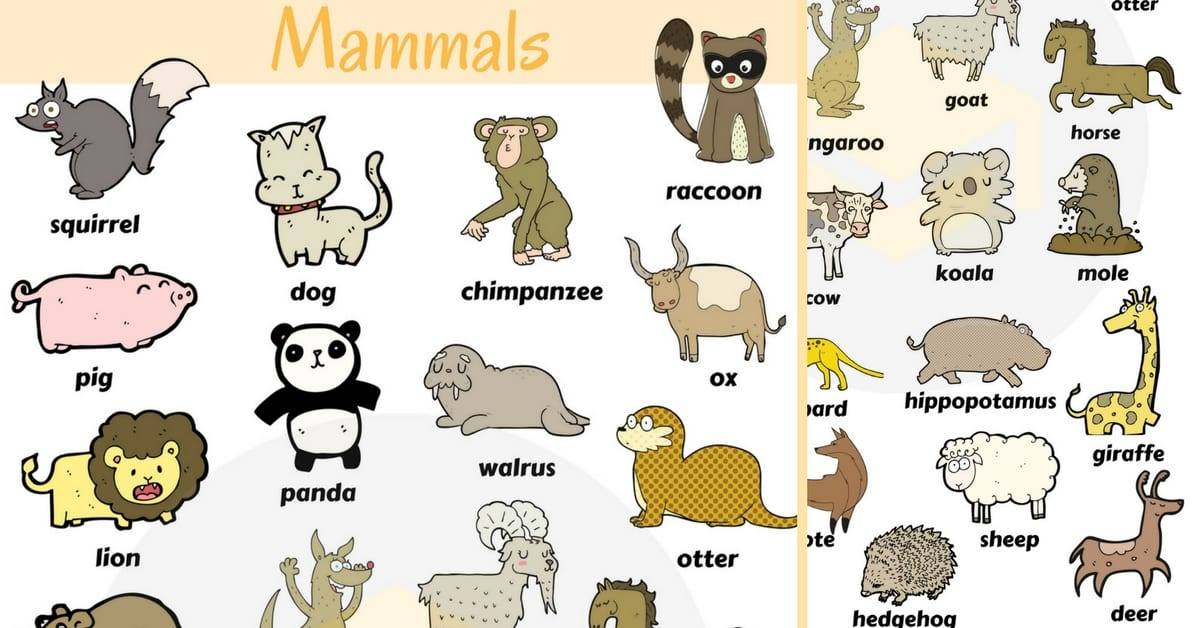 List of Mammals: Useful Mammal Names with Pictures 1