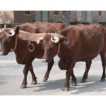 Domestic Animals | Farm Animals | Useful List & Great Images 24