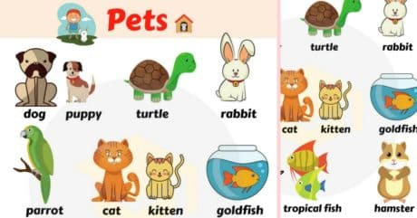 Pets Vocabulary in English | Learn Pet Names 242