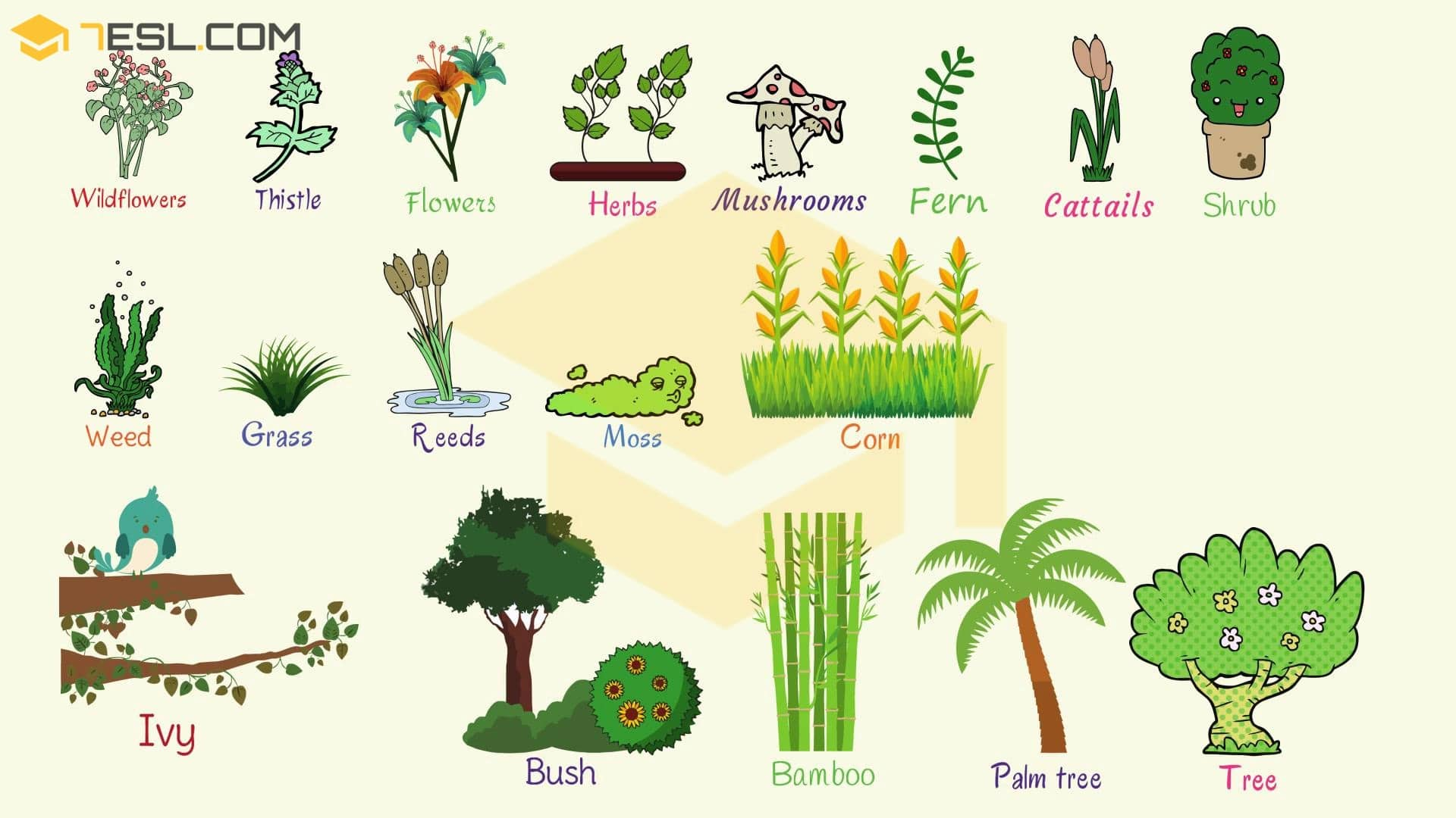 Plant Names: List of Common Types of Plants and Trees - 7 E S L