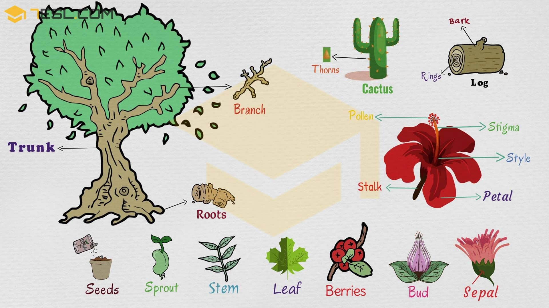 Parts of A Plant: Useful Plant Parts with Pictures