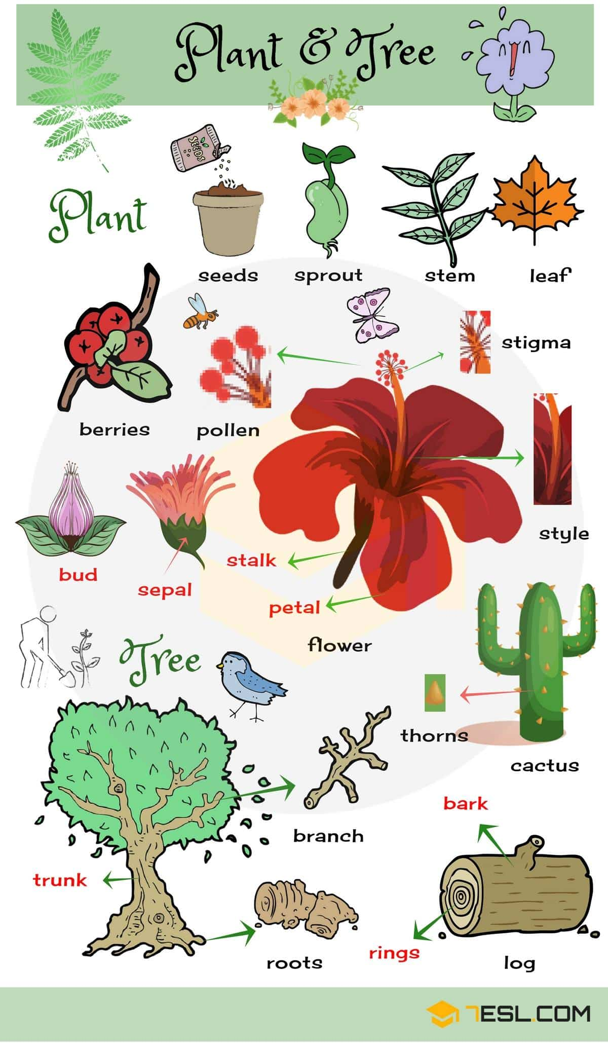 Parts of a Plant | Parts of a Flower | Parts of a Tree