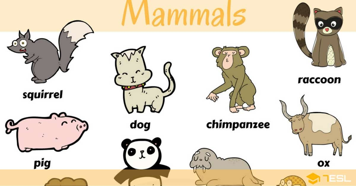 Mammals Pictures And N...