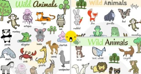 Wild Animals Vocabulary in English | Learn Wild Animal Names 17