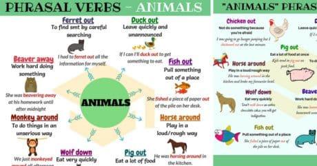 20+ Useful Animals Phrasal Verbs in English 20