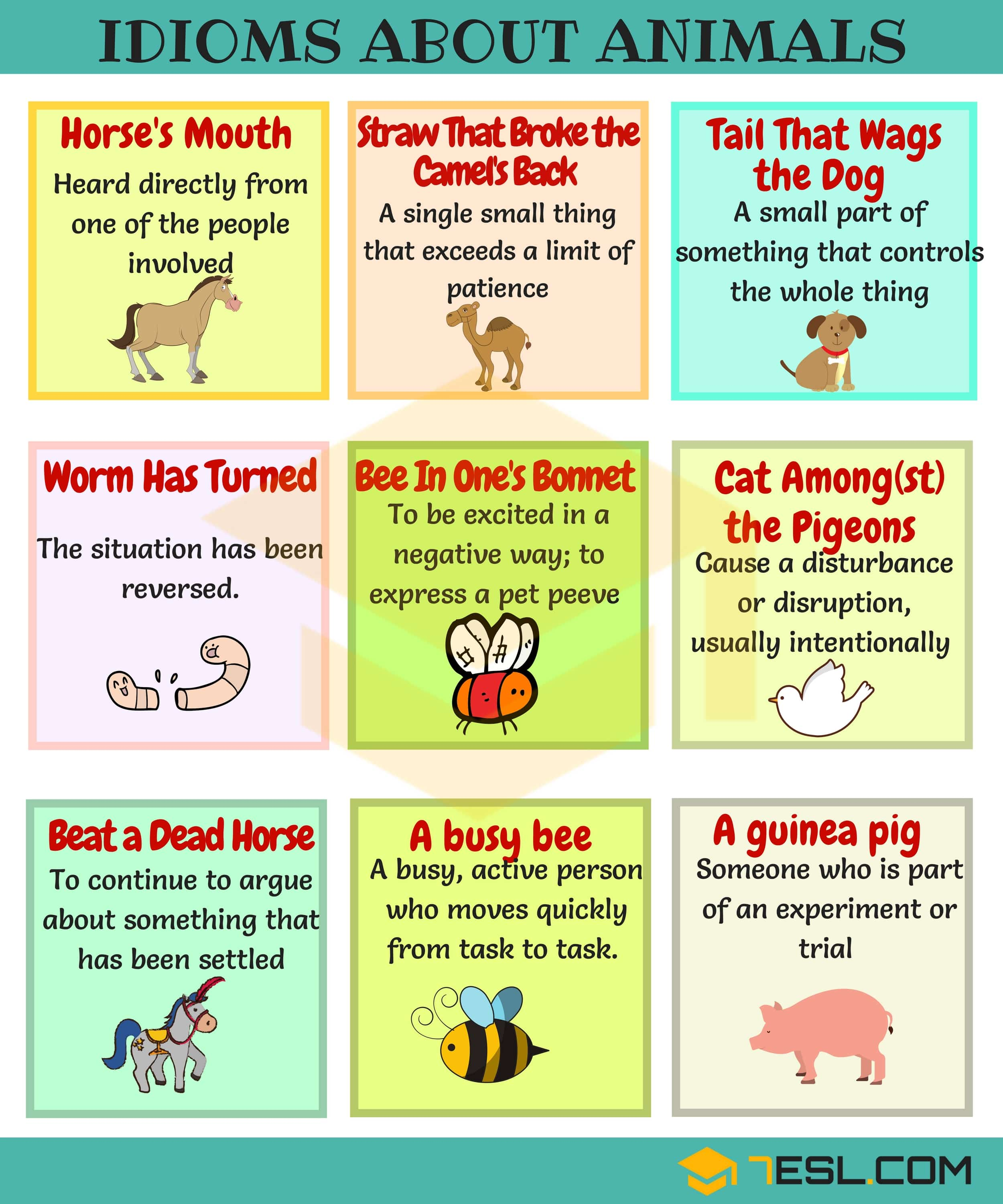 85 Amazing Animal Idioms In English A To E 7 E S L