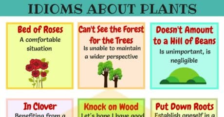 15+ Common Plants and Flowers Idioms in English 12