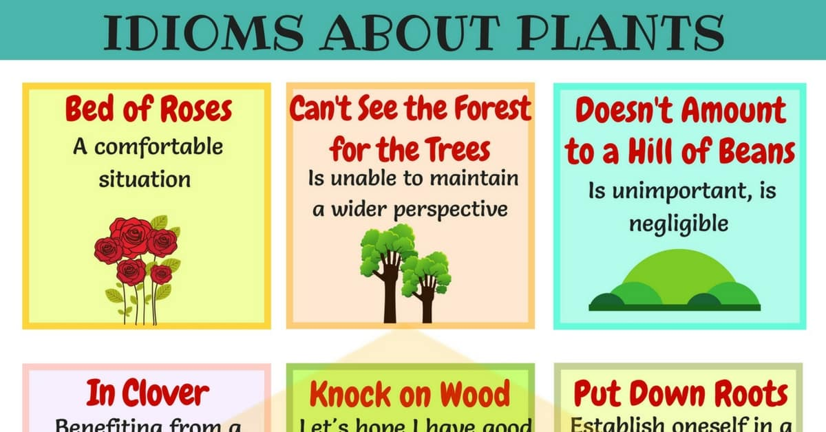 15+ Common Plants and Flowers Idioms in English 1