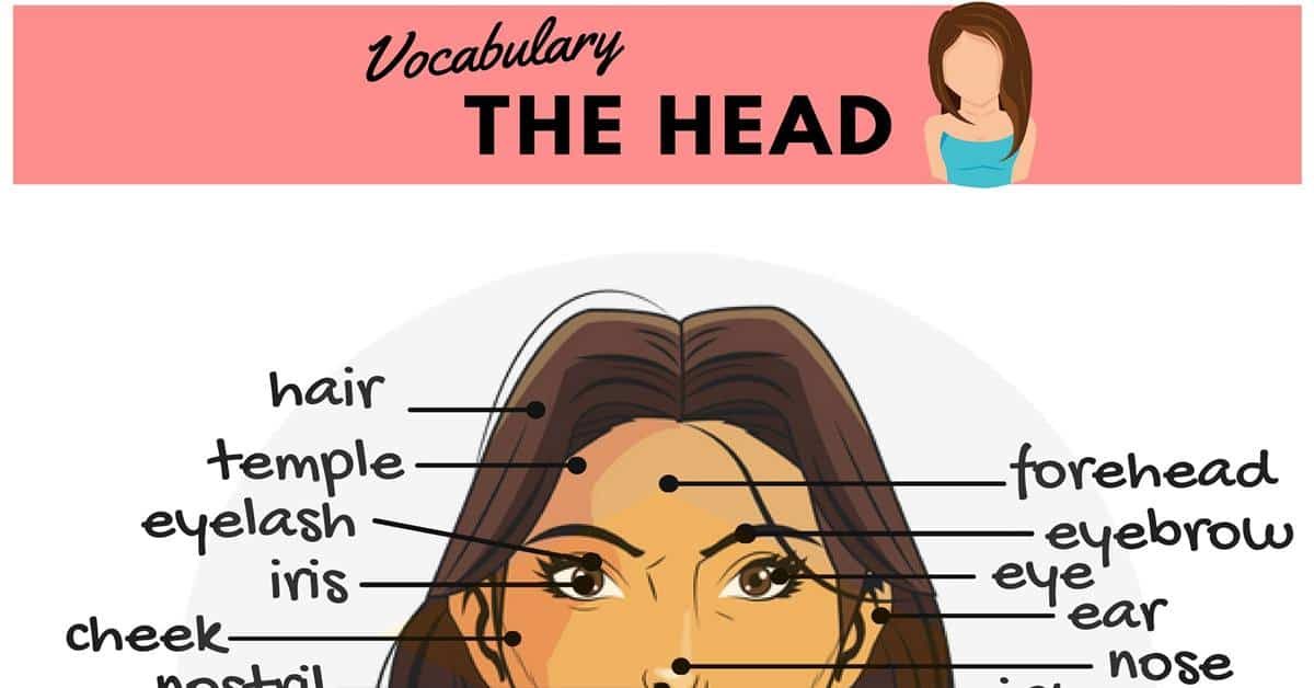Parts of the Face Names | Human Head Vocabulary 21