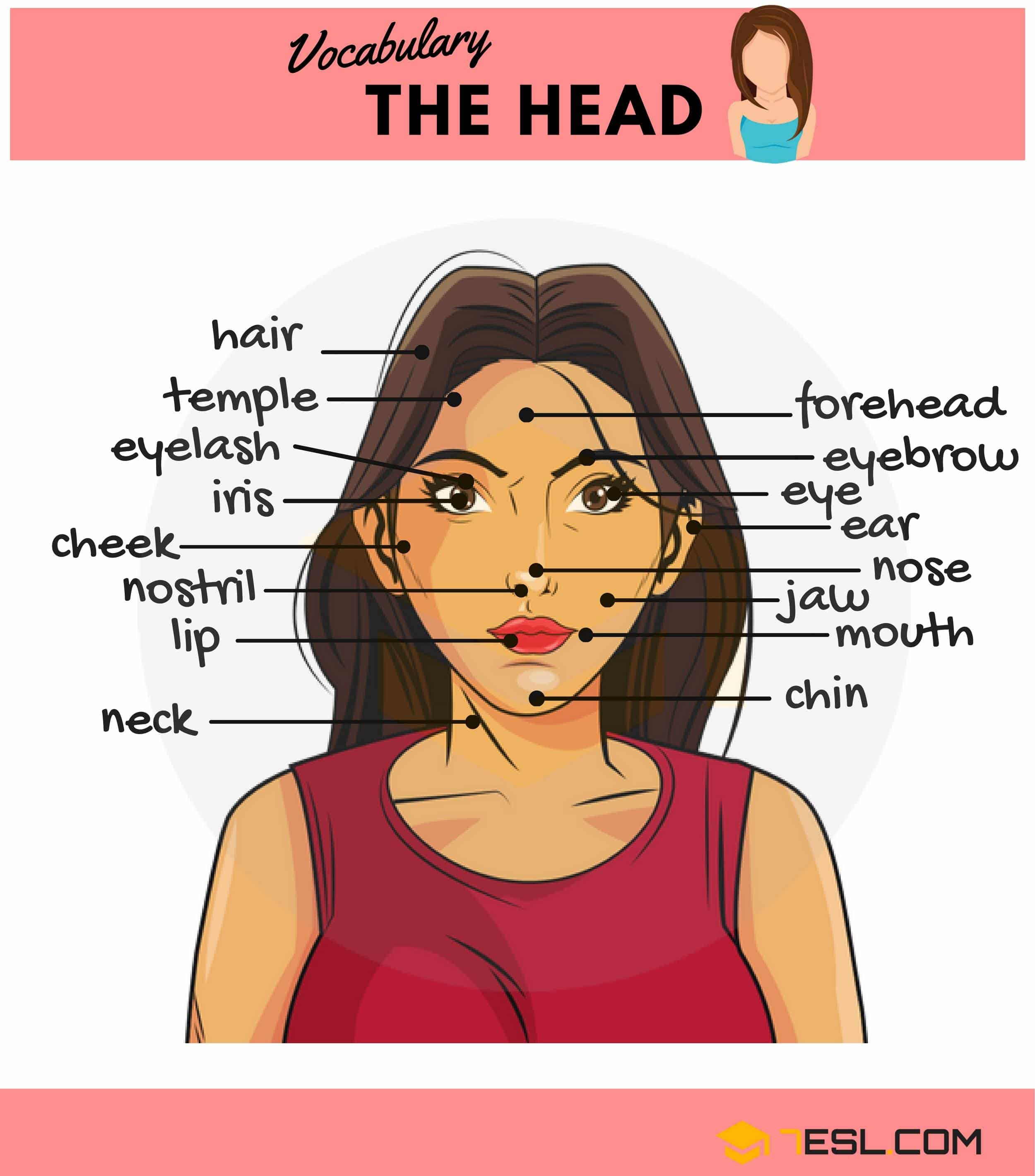 Parts of the Head | Image