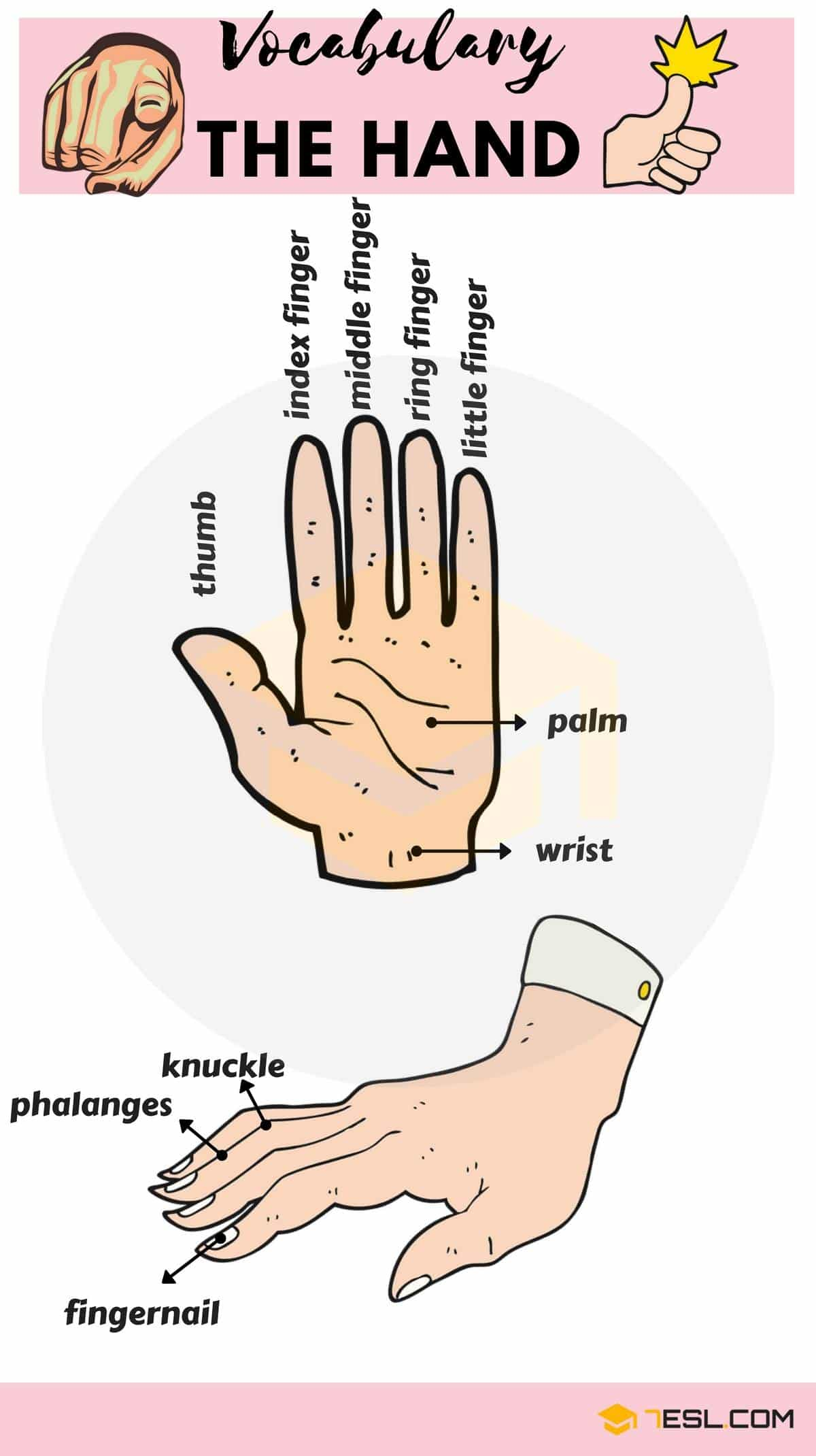 Parts of the Hand Names | Image