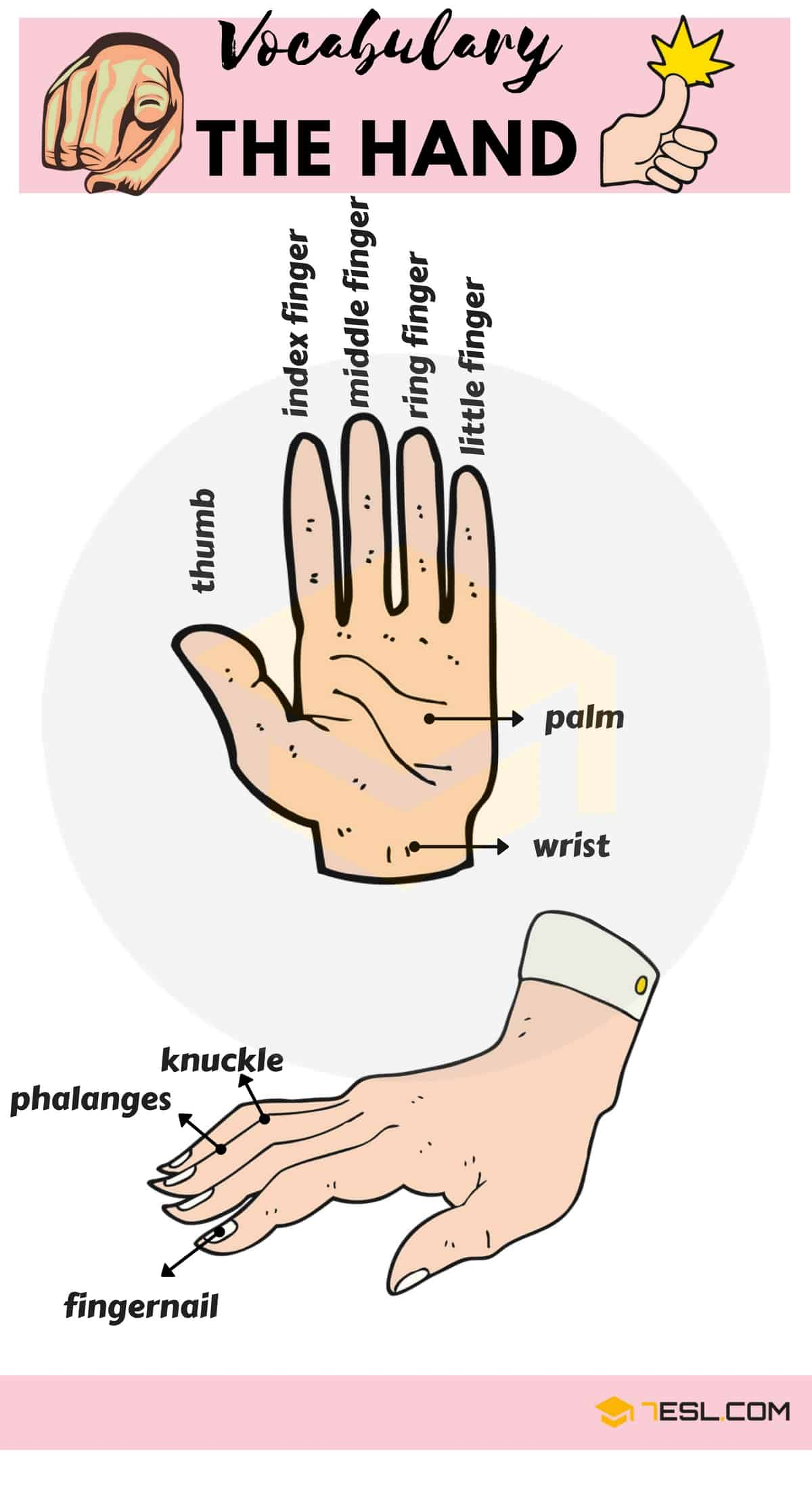 Parts of the Hand Vocabulary in English | Hand Parts Names