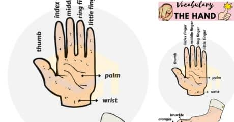 Parts of the Hand Vocabulary in English | Hand Parts Names 98