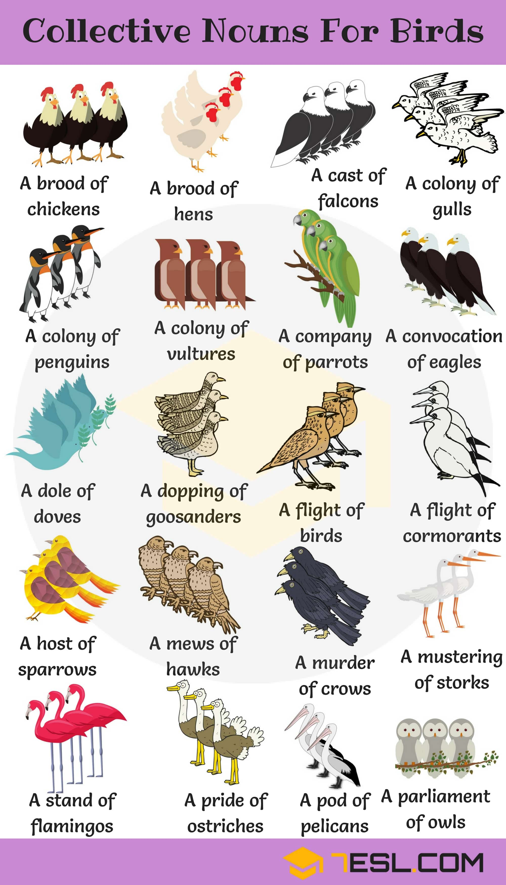 Bird Group Names Image
