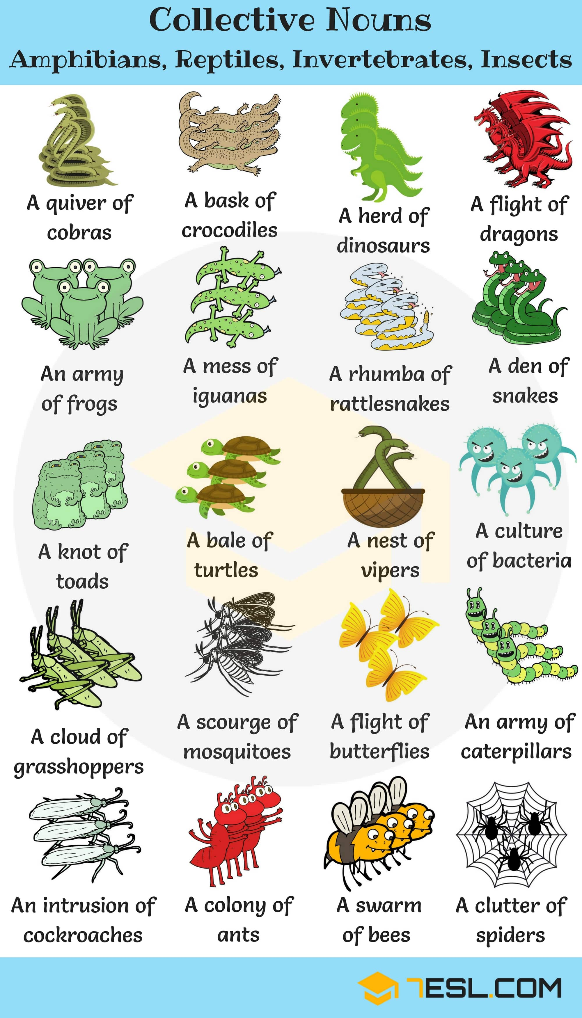 250+ Collective Nouns For Animals in English