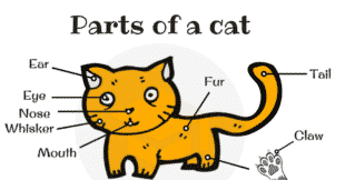 Learn Different Parts of a Cat in English (with Picture)