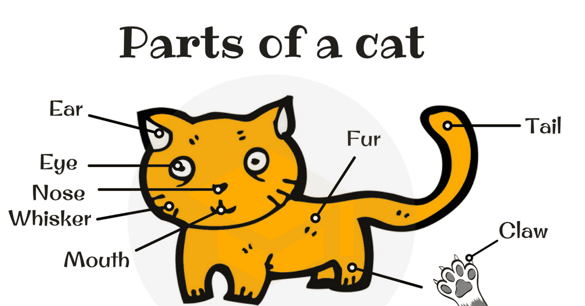 Different Cat Parts: Useful Cat Anatomy with Pictures 1
