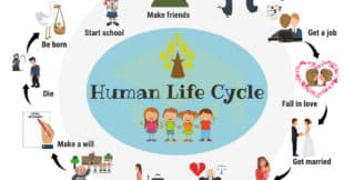 Learn Human Life Cycle Vocabulary with Pictures