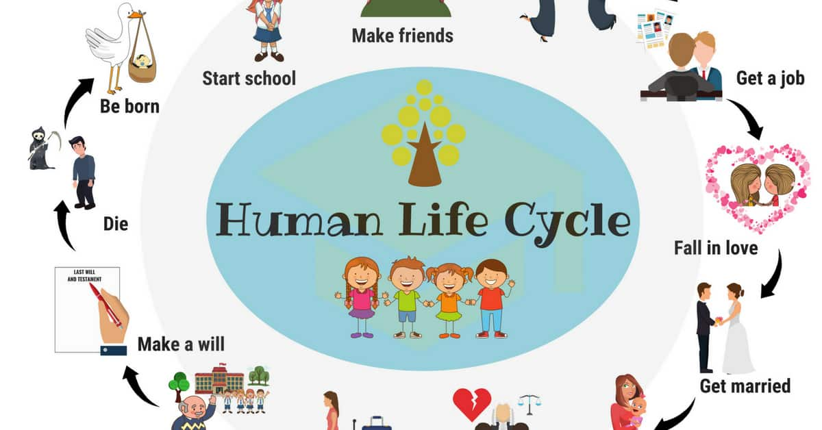 Learn Human Life Cycle Vocabulary with Pictures 1