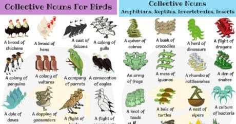 250+ Useful Collective Nouns For Animals in English 117