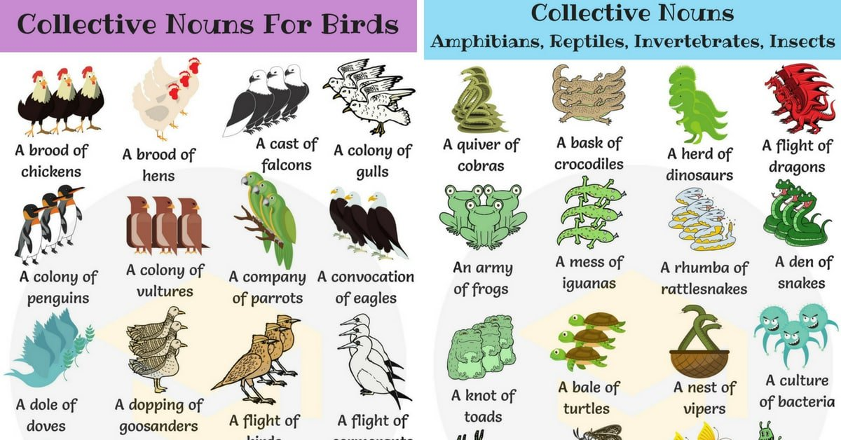 Animal Group Names: 250+ Collective Nouns for Animals 1