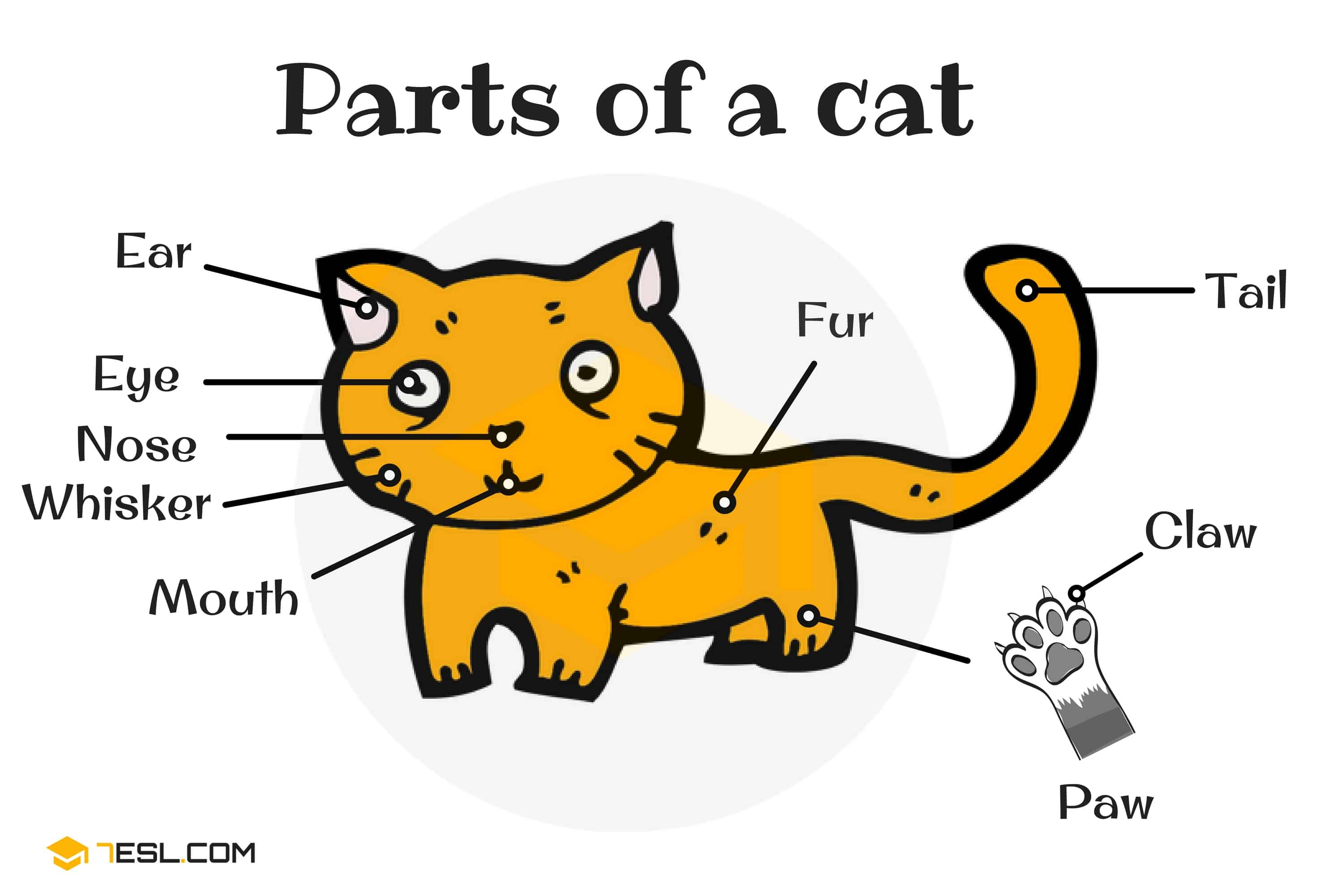 Animal Body Parts Vocabulary in English (with Pictures) 12