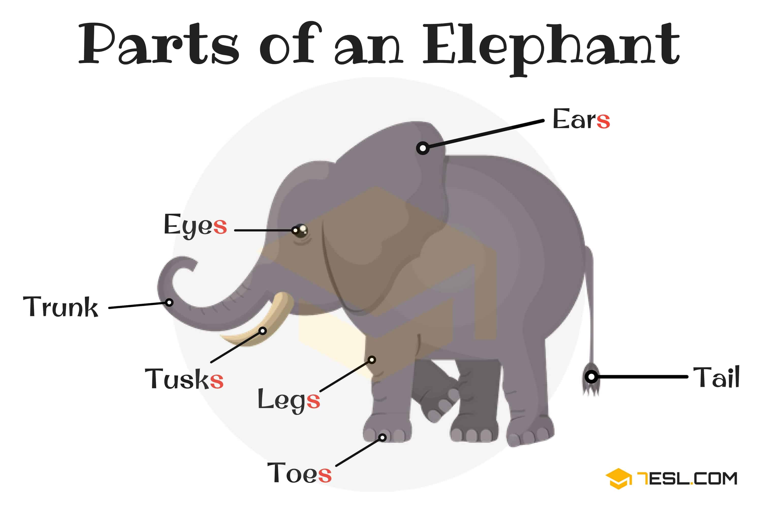 Parts of an Elephant Vocabulary in English