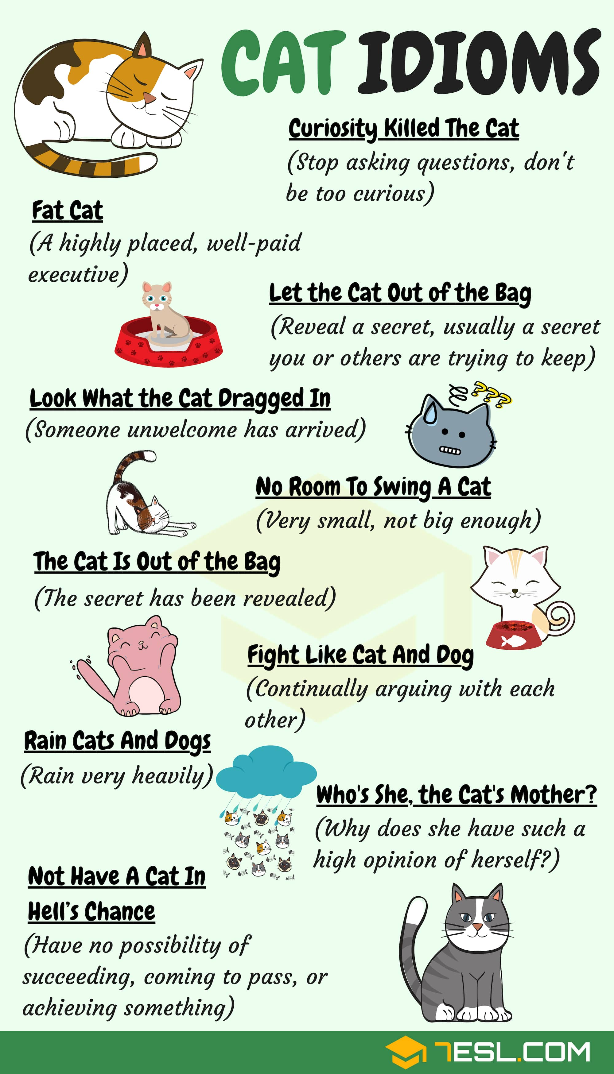 Common Cat Idioms in English