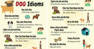 DOG Idioms: 16 Common DOG Idioms with Examples