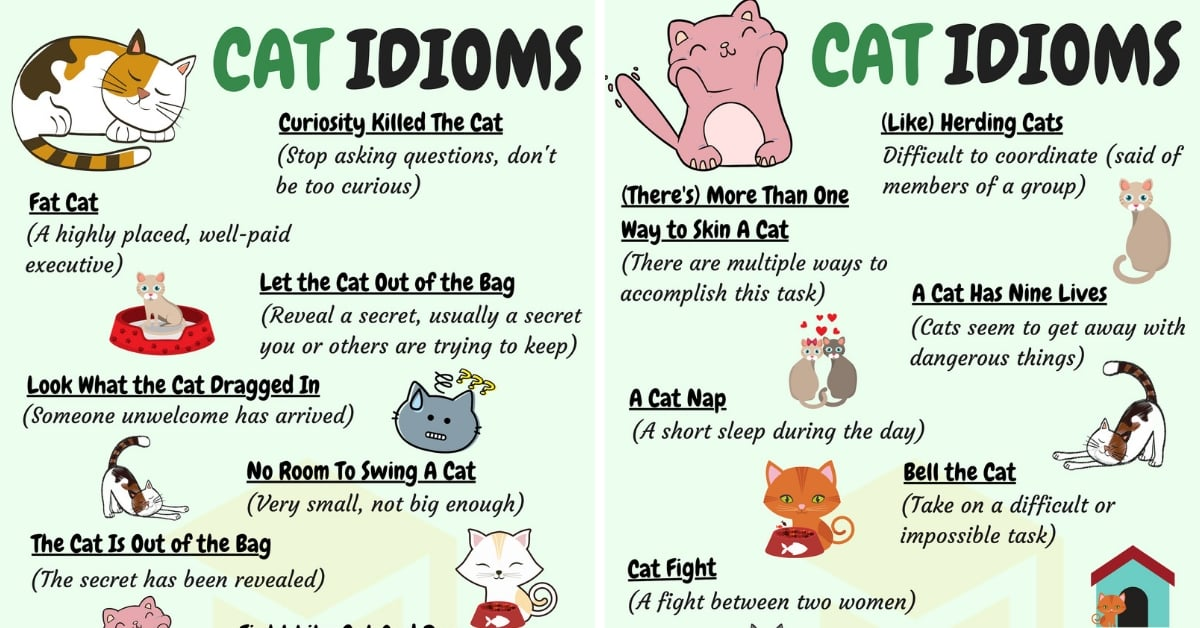 CAT Idioms: 30 Useful Cat Idioms & Sayings in English 1
