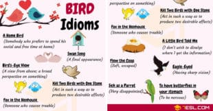 BIRD Idioms: 27 Useful Idioms about Birds with Examples