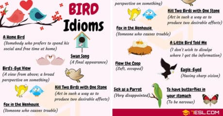 BIRD Idioms: 27 Useful Idioms about Birds with Examples 1